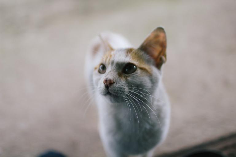 Gatito!