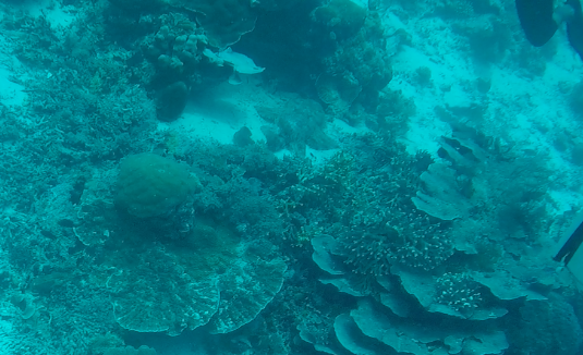 All hail the Wobbegong shark! Can you spot it?